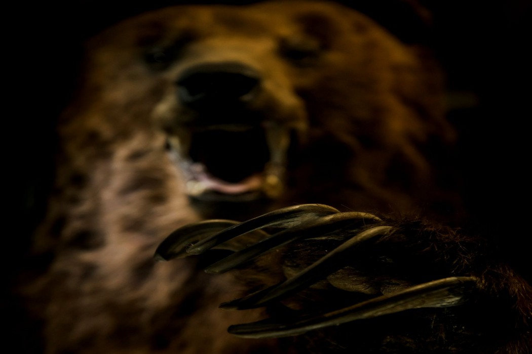 "The ""Bear Man"" and Other Creepy Forest Tales – The 13th Floor"