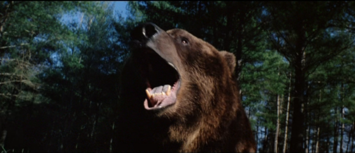 grizzly2 (1)