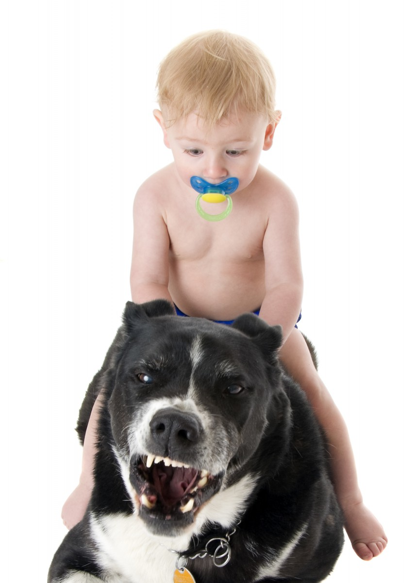 Baby and his dog - best friend and family