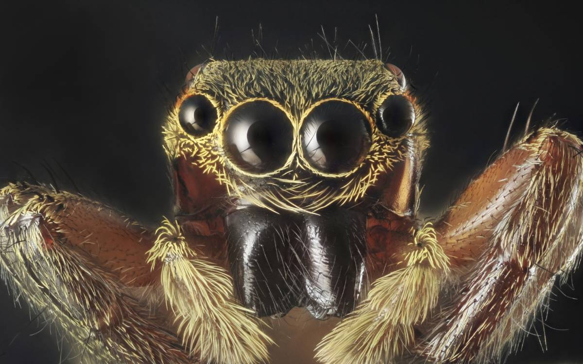 Spider portrait with 7X magnification and full depth of view.