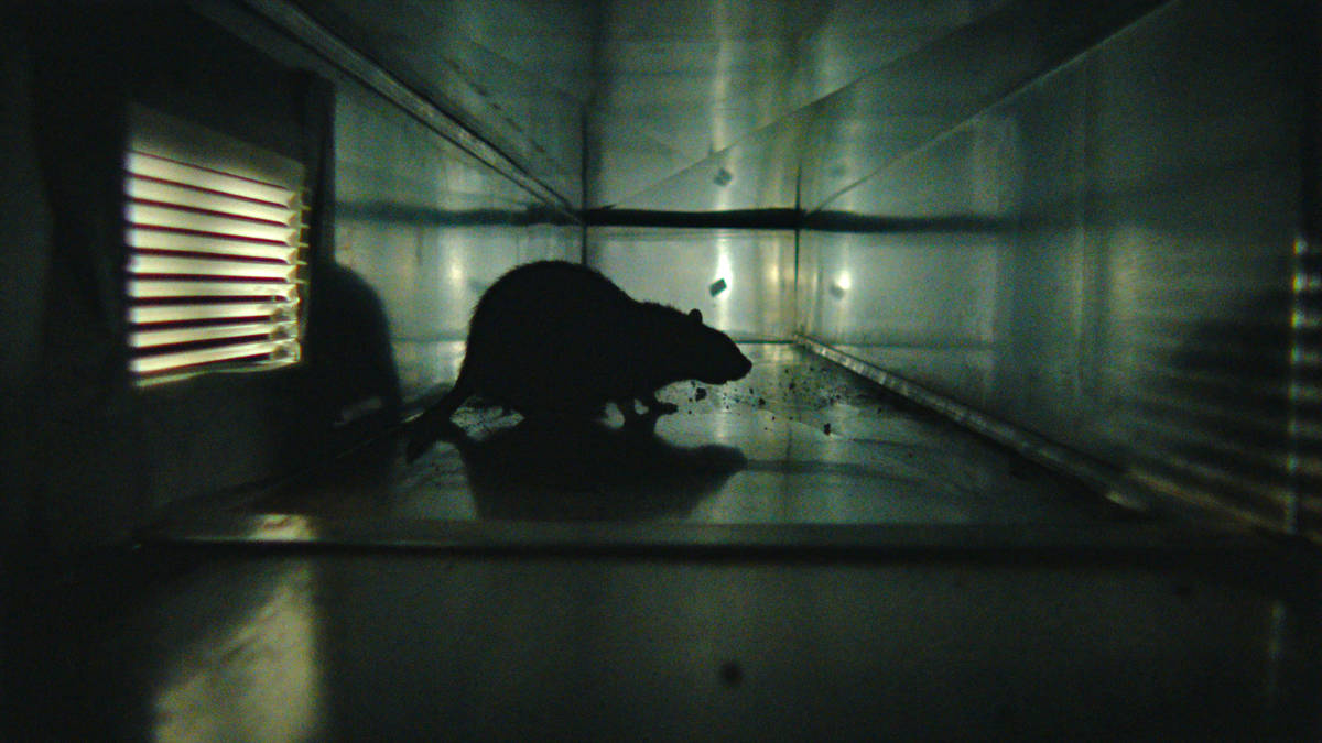 rats-the-most-disgusting-movie-ever-made
