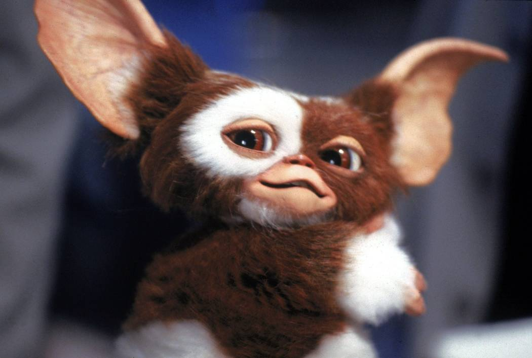 Gizmo Was An Alien 5 Bizarre Revelations From Horror Movie Novelizations The 13th Floor